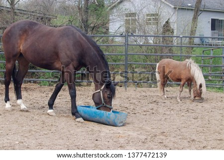 A bay horse eating  from a blue trough with a palomino pony in the background. #1377472139