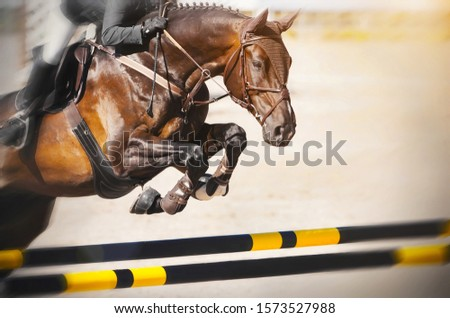A Bay racehorse with a rider in the saddle quickly jumps over the high yellow-black barrier at a show jumping competition on a Sunny summer day.