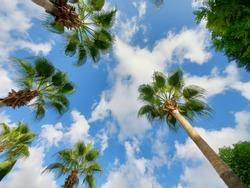 A beach with a palm tree. High quality photo