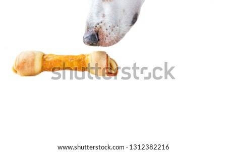 A Beagle Mix hound dog's snout is captured sniffing a triple meat wrapped dog bone.