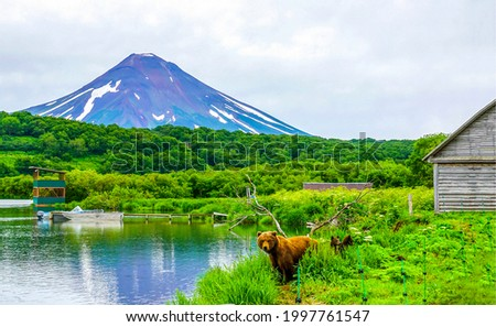 A bear with cubs on the shore of a mountain pond. Bear with cubs at water. Bear with two cubs Stock photo ©