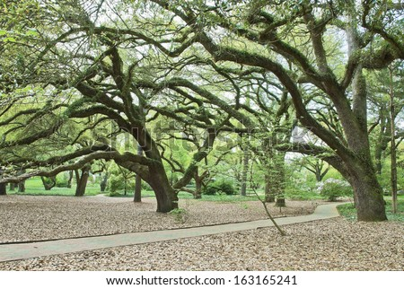 A beautiful and manicured southern park in spring, carpeted with leaves, canopied by huge live oaks, with blooming dogwoods and azaleas.