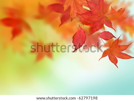 A beautiful autumn background with falling leaves.
