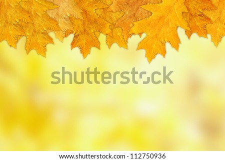 A beautiful autumn background with leaves