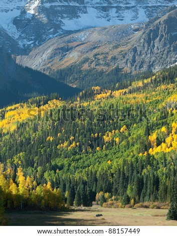 A beautiful autumn meadow at the base of Mount Sneffel off of CO Rd. 7, Ridgeway,Colorado