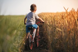 A beautiful baby boy rides a bicycle along the countryside.