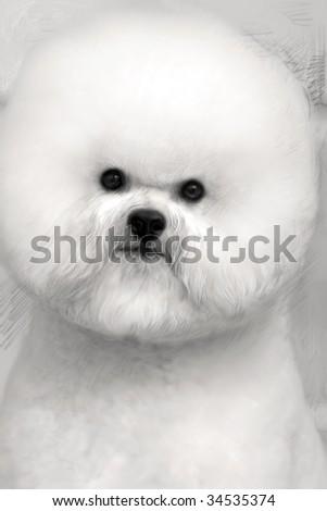 a beautiful bic hon dog