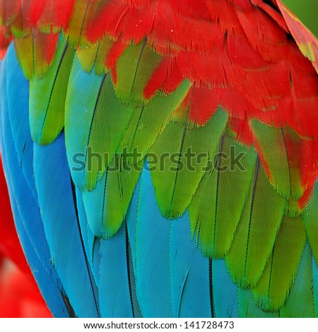 A beautiful bird Greenwinged Macaw feathers