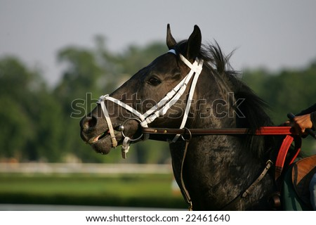 black thoroughbred racehorse. lack thoroughbred race