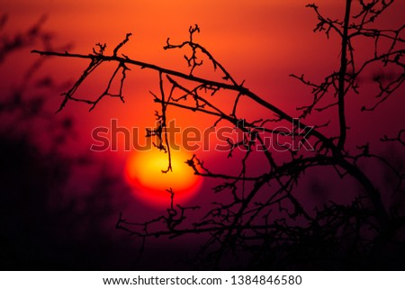 A beautiful, blazing sunset through the tree branches. Spring sunset.