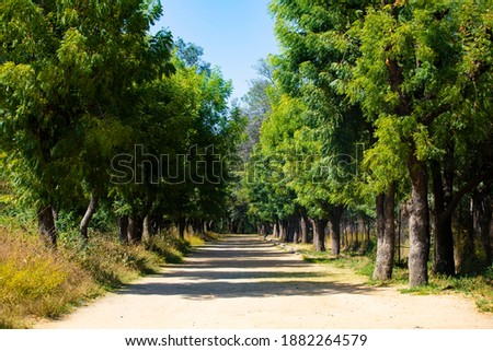 A beautiful boulevard rood with green trees on both sides of the path. Foto stock ©