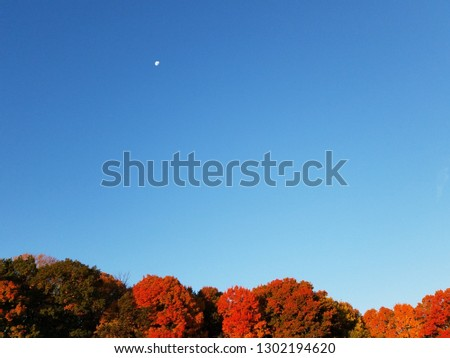 A beautiful, bright blue morning New England sky in autumn features a moon in the upper left hand corner and a line of brightly colored fall leaves of tree  tops along the bottom.  Horizontal view. #1302194620