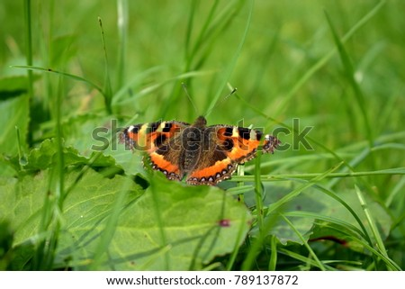 A beautiful butterfly is resting in the fresh grass in a park #789137872