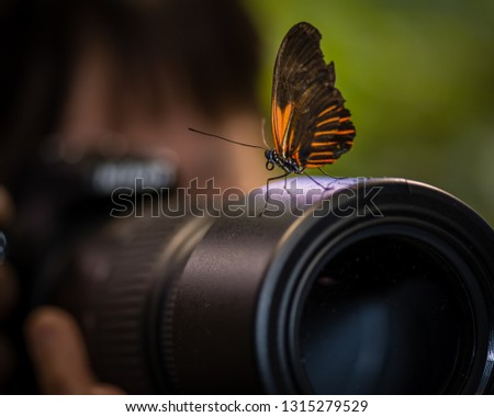 A beautiful butterfly lands  on the camera lens of   a photographer while taking pictures of butterflies.