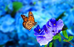 a beautiful butterfly on blue flowers with blue blurry background.this photo contains a beautiful butterfly with wings sitting on blue colored flowers.a nice cute and latest nature photo of flowers.