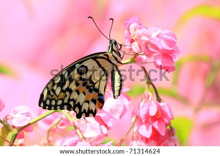 beautiful butterfly on pink flower with very beautiful pink background ...