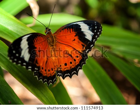 A beautiful butterfly sitting in the tree