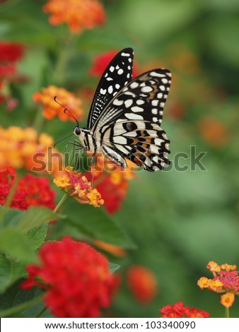A beautiful butterfly stopping at a flower and eat its nectar. Got this shot with micro photography equipments.