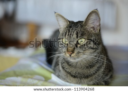 A beautiful cat laying on a bed with