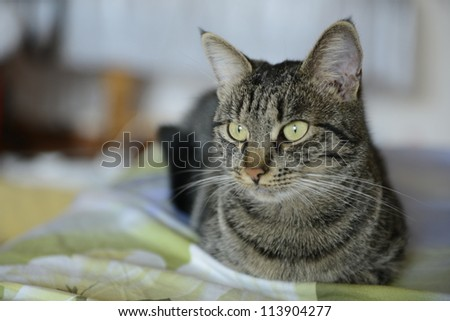 A beautiful cat laying on a bed with - stock photo