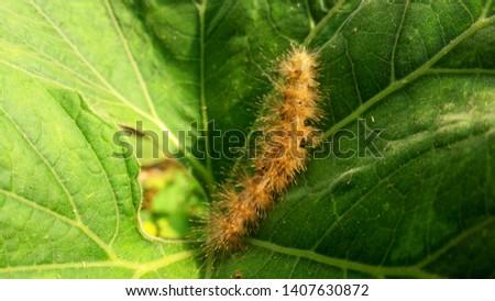 A Beautiful caterpillar Insect Photography #1407630872