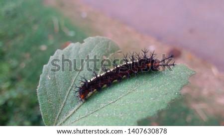 A Beautiful caterpillar Insect Photography #1407630878