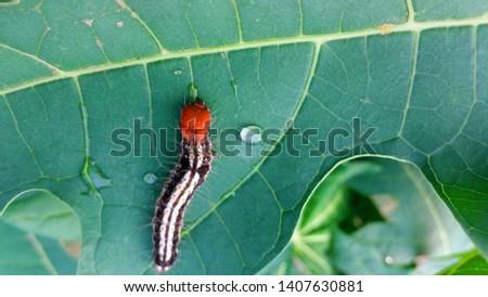 A Beautiful caterpillar Insect Photography #1407630881