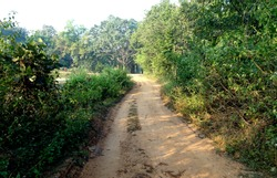 A beautiful clean rural village dirt road path in West Bengal India with plants and bushes beside