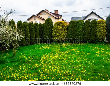 A beautiful clearing with yellow flowers and trees. Background. #632690276