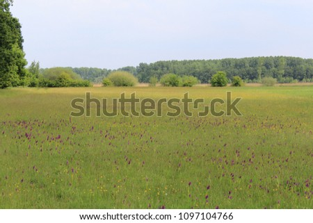 a beautiful colorful field with wild flowers in the spring sunshine with buttercups and wild orchids