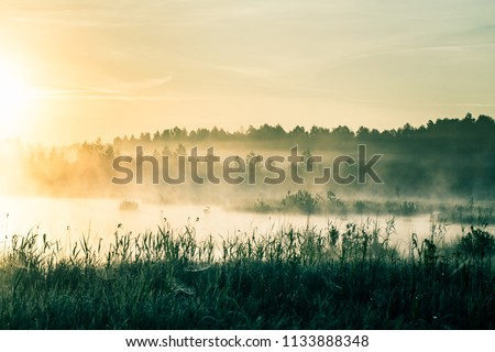 A beautiful, colorful landscape of a misty swamp during the sunrise. Atmospheric, tranquil wetland scenery with sun in Latvia, Northern Europe.
