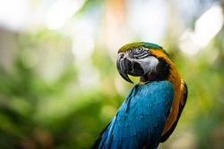 A Beautiful Colorful Parrot Closeup with Green Blurred Background
