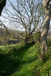 A beautiful countryside path: lush green grass, yellow spring wildflowers, bare winter trees; hills in the distance; hedgerows, fences a field; an ancient footpath up a holloway in the English country