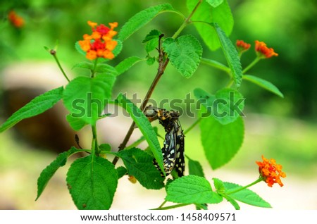 Dead butterfly Images and Stock Photos - Page: 3 - Avopix com
