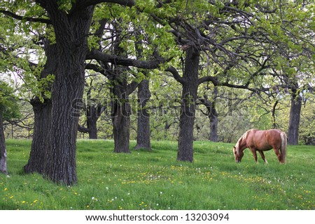 A beautiful draft horse grazing in a beautiful spring woods. - stock photo