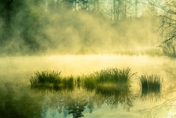 A beautiful flooded wetlands during the sunrise in spring. Fress, green grass growing in the water. Misty morning over the swamp. Springtime scenery in Northern Europe.