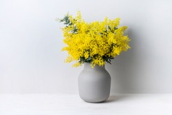 A beautiful floral arrangement of Australian native yellow wattle/acacia flowers in a grey vase on a white table with a white background. Know as Acacia baileyana or Cootamundra wattle.