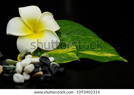 A beautiful flower with leaves and tiny stones on dark black background. Concept of spa,relaxation,rest,pampered,zen. #1093402316