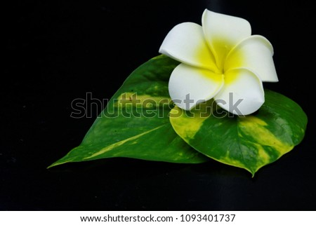 A beautiful flower with leaves  on dark black background. Concept of spa,relaxation,rest,pampered,zen. #1093401737