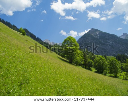a beautiful foliage tree in the mountains