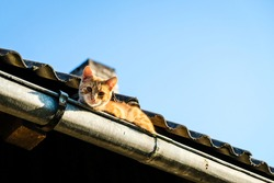 A beautiful ginger cat sits on the roof in a rain gutter in the summer, selective focus
