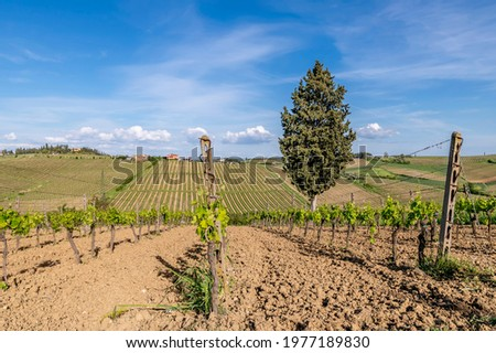 A beautiful glimpse of the countryside and vineyards near Cerreto Guidi, Florence, Italy, under a beautiful sky Zdjęcia stock ©