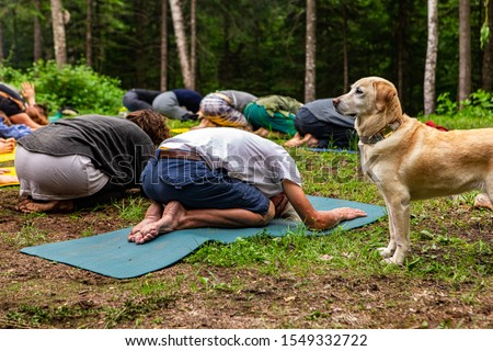 A beautiful golden labrador dog is seen standing from the side in woodland as a diverse group of people seek enlightenment through mindful meditation.