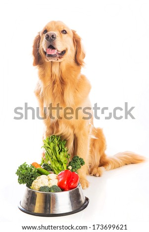 A beautiful golden retriever dog with a smile on his face sitting next to a bowl of fresh vegetables.