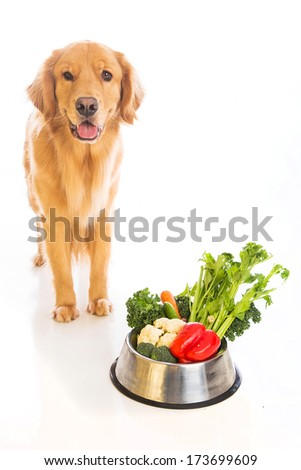 A beautiful golden retriever dog with a smile on his face standing next to a bowl of fresh vegetables.