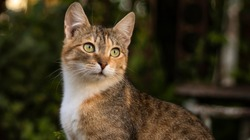 A beautiful homeless cat walks in nature, in the countryside, on the grass. Sunny day, a cat in the shade under a tree. Close-up, blurred bokeh background.