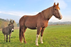 a beautiful horse and a cute donkey together in a meadow