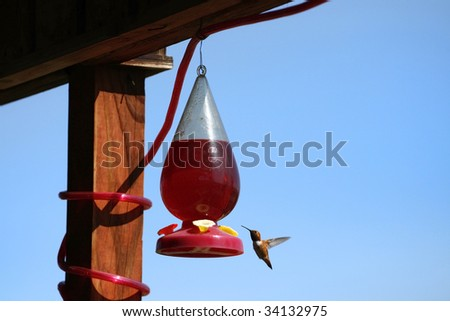 A beautiful hummingbird at a feeder in the summer.