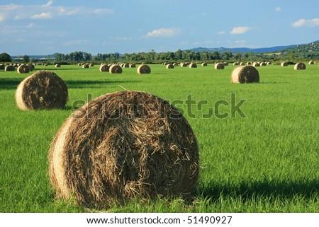 A beautiful hungarian field, a lot of bale