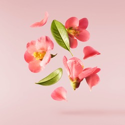A beautiful image of sping pink flowers flying in the air on the pastel pink background. Levitation conception. Hugh resolution image